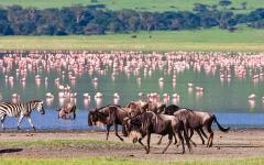 africa_tanzania_ngorongoro_zebras_and_wildebeests_in_the_ngorongoro_crater_flamingos