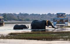 Africa_Zimbabwe_Elephant_Cub_Chobe_River_National_Park
