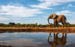 A regal African elephant standing on the edge of a waterhole with its reflection bouncing off the surface of the water