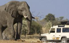 An African elephant staring down a white safari tour jeep | Chobe National Park, Botswana, Africa