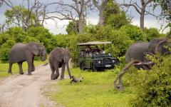 Three elephants stand next to jeep during safari in Kenya Africa