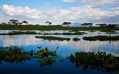 View of the landscape around Lake Naivasha in Kenya, Africa