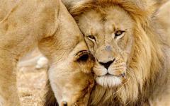 Kruger National Park, South Africa safari.