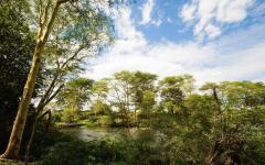 springs surrounded by lush green trees in tsavo national park kenya