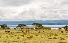 A variety of wildlife on a Kenyan safari land with Naivasha Lake in the background   Nairobi, Kenya, Africa