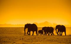 Silhouette of a herd of elephants taken at sunset in Kenya