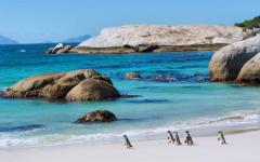 View of Boulders Beach, Cape Town, South Africa with group of penguins standing on the sand