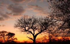 Sunset in South Africa producing dead-tree silhouettes in the foreground