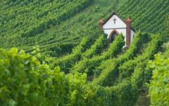 Australia Barossa Valley Vineyards