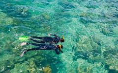 australia great barrier reef two snorkelers exploring underwater