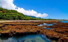 australia rainforest and reef view from the ocean