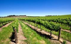 australia vineyards bright blue sky