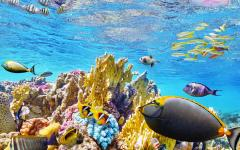 australia great barrier reef tropical fish swimming underwater
