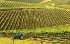 a view of vineyards in hunter valley with a tractor in the foreground