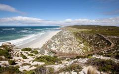 landscape view of a stretch of beach on seal bay kangaroo island on a sunny day