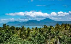 palm trees with mountains in the background at port douglas in queensland