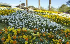 australia melbourne tour botanical garden