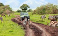 zebras surround a game vehicle in ngorongoro crater