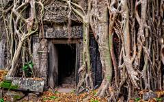 tree roots grow around an ancient door