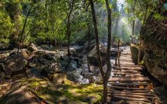 Forest landscape of Cambodia.