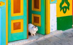 A cat resting on a doorstep in Medellin.