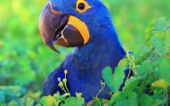 Costa Rica's iconic wildlife.