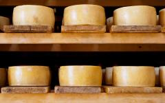 Wheels of pag cheese, which is a hard, distinctively flavored sheep milk cheese from the island of Pag.