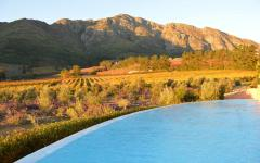 View of the Franschhoek landscape with a vineyard in the foreground | South Africa