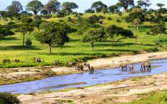 Elephants crossing a river in Serengeti National Park.