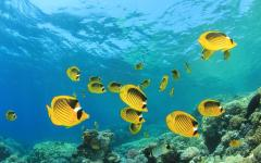 Coral reef fish in Fiji.