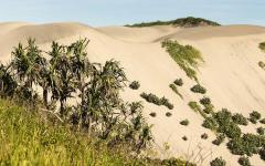 sand dunes in the national park sigatoka