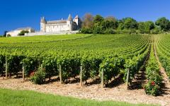a vineyard in Burgundy France