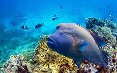 australia great barrier reef tropical colorful fish underwater