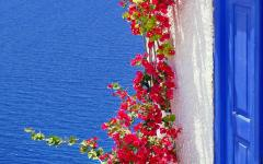 Foliage growth on the white and blue architecture in Santorini, Greece with the Aegean Sea in the background