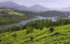 Munnar tea plantation.