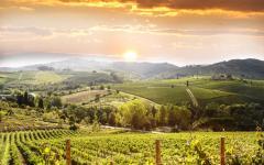 Chianti vineyards at sunrise, Tuscany.