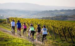 Bike through Tuscan Vinyards. Photo Credit: Bike Florence&Tuscany