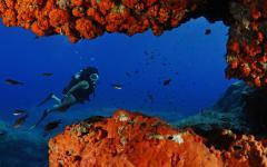 Diving Lampedusa Reefs. Photo Credit: Marina Diving Center