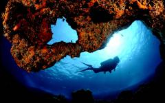 Diving with Marina Diving Center. Photo Credit: Marina Diving Center