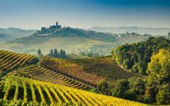 Langhe vineyards of Piedmont.