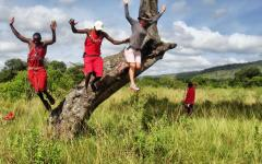 Tourist taking a leap of faith off of a tree with two locals