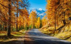 colorful trees in fall in the Cortina D'ampezzo region of the Dolomites