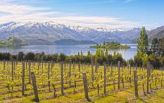 Sights of vineyard paradise, Wanaka.