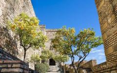 Orange trees at the Alcazaba of Malaga.