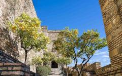 spain malaga orange trees in the moorish castle