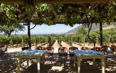 Outdoor dining at a vineyard in Chile.