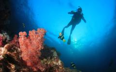 australia scuba diver in the great barrier reef underwater