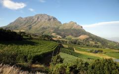 Beautiful view of a vineyard in Stellenbosch, South Africa with rocky mountains in the background