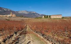 spain vineyards in autumn paganos laguardia