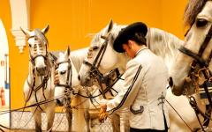 The Royal Andalusian School of Equestrian Art. Photo credit: realescuela.org